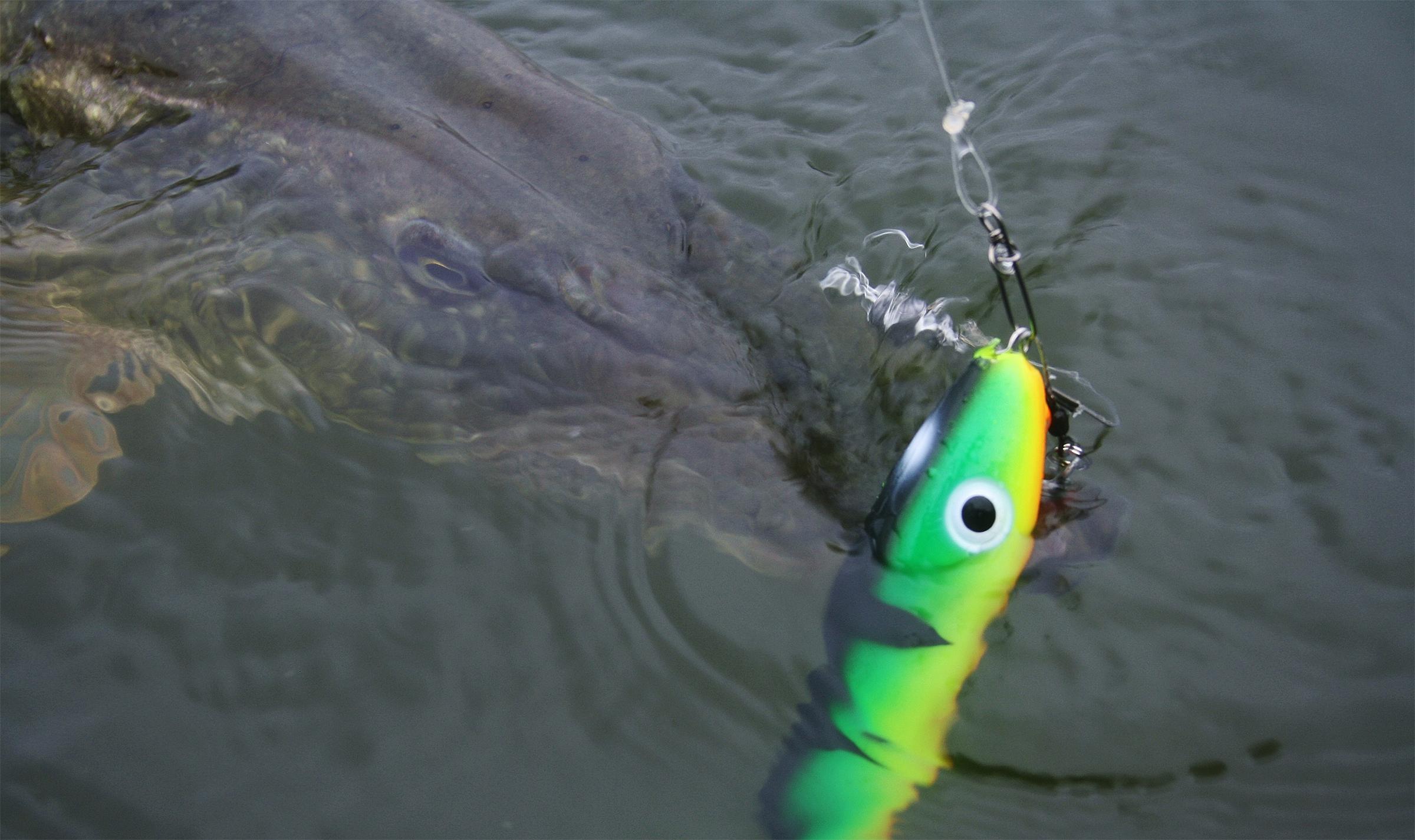 Välkomna till Klippans Sport och Fiskevårdsförening!